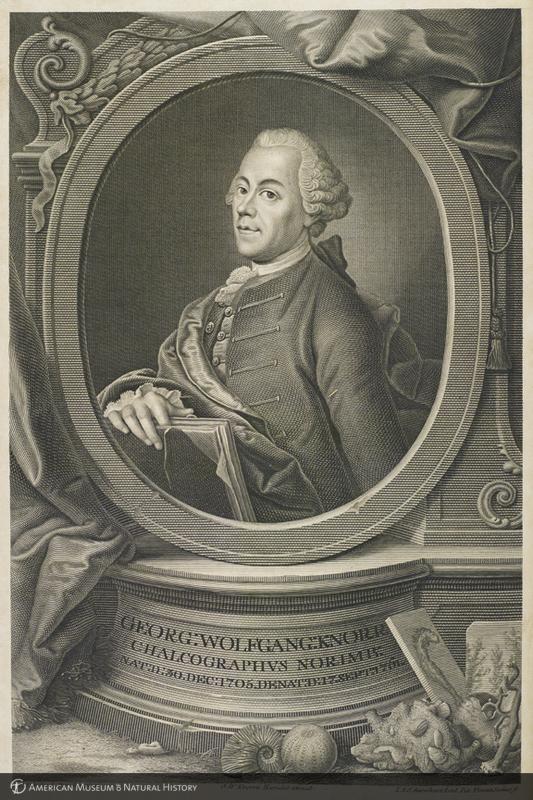 Portrait of Georg Wolfgang Knorr from his Recueil de monumens des catastrophes que le globe terrestre a éssuiées