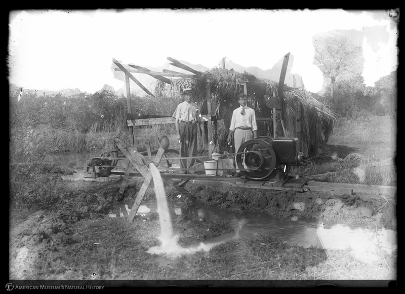 Barnum Brown and T. Perez pumping out Chapapote Spring with a 6.5 horsepower pump, Cuba, 1918