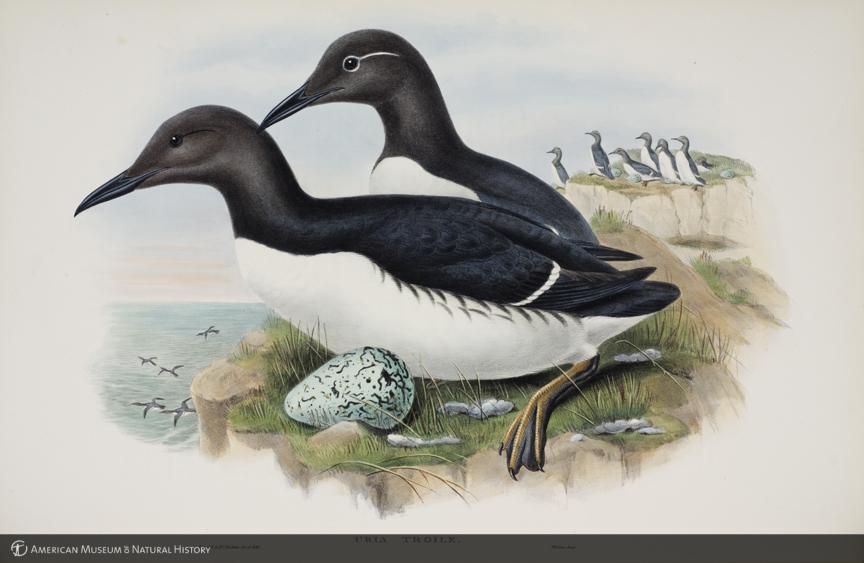 Historias Naturales, Aves extraordinarias