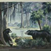 Proposed design, Florida Black Bear Group, painting