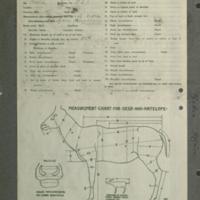Zebra specimen measurement chart