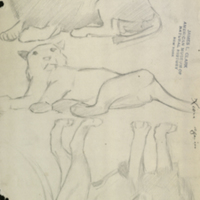 Lion and lioness, sketches for use in Lion Group, Akeley Hall of African Mammals