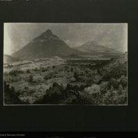 Landscape painting, photograph mounted to card, for use in Gorilla Group, Akeley Hall of African Mammals