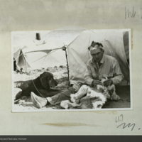 Expedition member at work, field photograph for use in Mountain Lion Group, Hall of North American Mammals