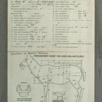 Impala specimen measurement chart, for Nairobi Museum