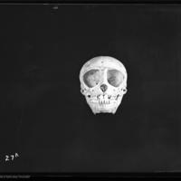http://lbry-web-002.amnh.org/san/to_upload/5x7/19101.jpg