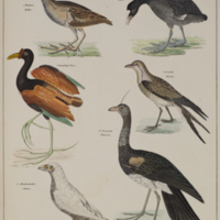 http://lbry-web-002.amnh.org/san/naturalhistories/b11364932_2.jpg