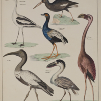 http://lbry-web-002.amnh.org/san/naturalhistories/b11364932_1.jpg