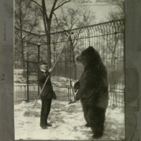 Bear and zoo attendant, photograph mounted to card, for use in Alaska Brown Bear Group, Hall of North American Mammals