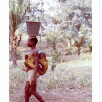 http://lbry-web-002.amnh.org/san/photoprintcollections/Arth/ppc-a78-100213278-24.jpg