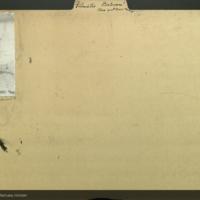 Blue spot-nose monkey, photograph mounted to folder