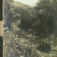 Landscape, Africa, photograph mounted to botany of Africa folder