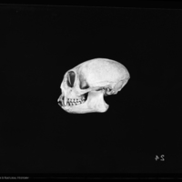 http://lbry-web-002.amnh.org/san/to_upload/5x7/19088.jpg
