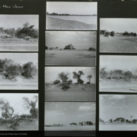 Trees and landscape, Africa, expedition photographs mounted to card, for use in Upper Nile Region Group, Akeley Hall of African Mammals