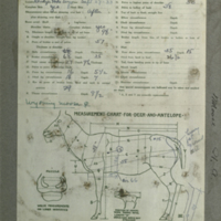 Moose specimen measurement chart, for use in Alaska Moose Group, Hall of North American Mammals