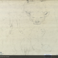 Hyena, pencil drawing to construct clay model, Akeley taxidermy method
