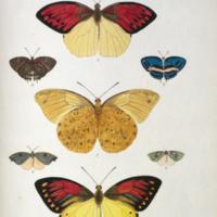 http://lbry-web-002.amnh.org/san/naturalhistories/b10527953_5.jpg