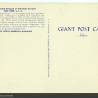 http://lbry-web-002.amnh.org/san/AMNH_postcards/100213323_26v.jpg