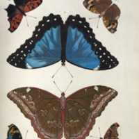 http://lbry-web-002.amnh.org/san/naturalhistories/b10527953_4.jpg