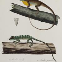 http://lbry-web-002.amnh.org/san/naturalhistories/b10663848_3.jpg