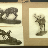 Whitetail deer sculptures, photographs mounted to Artiodactyla Deer folder