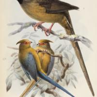 http://lbry-web-002.amnh.org/san/naturalhistories/b11310480.jpg