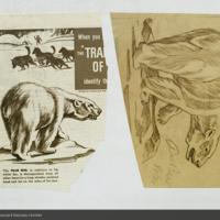 Polar bear, magazine clipping and illustration for use in Polar Bear Diorama
