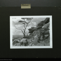 Museum artists painting, Leukenia Hill, field photograph mounted to card, for use in Klipspringer Group, Akeley Hall of African Mammals
