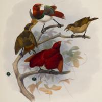 http://lbry-web-002.amnh.org/san/naturalhistories/b10610169_4.jpg