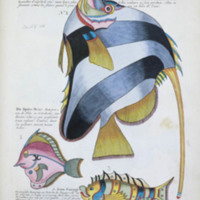 Three species of fish with engraved text from Renard's Poissons, écrevisses et crabes