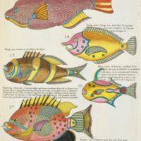 Various species of fish from Renard's Poissons, écrevisses et crabes
