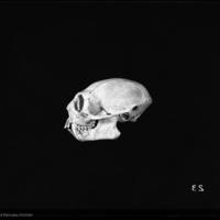 http://lbry-web-002.amnh.org/san/to_upload/5x7/19084.jpg