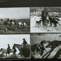 Expedition team, men, horses, dogs, field photographs for use in Mountain Lion Group, Hall of North American Mammals