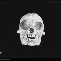 http://lbry-web-002.amnh.org/san/to_upload/5x7/19077.jpg