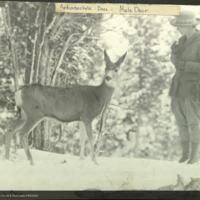 Woman with mule deer