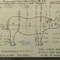 Black Rhinoceros, specimen measurement chart for Black Rhinoceros Group, Akeley Hall of African Mammals