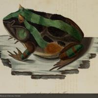 http://lbry-web-002.amnh.org/san/naturalhistories/b10663848_2.jpg
