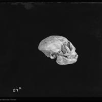 http://lbry-web-002.amnh.org/san/to_upload/5x7/19100.jpg