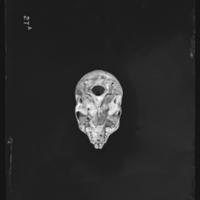 http://lbry-web-002.amnh.org/san/to_upload/5x7/19102.jpg