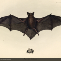 http://lbry-web-002.amnh.org/san/naturalhistories/b10187236_3.jpg
