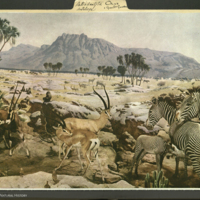 Water Hole Group, 1937 Life magazine clipping, mounted to Artiodactyla: Antelope folder