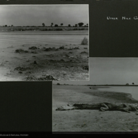 Waterfront and crocodile, Africa, expedition photographs mounted to card, for use in Upper Nile Region Group, Akeley Hall of African Mammals