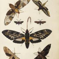 http://lbry-web-002.amnh.org/san/naturalhistories/b10527953_1.jpg