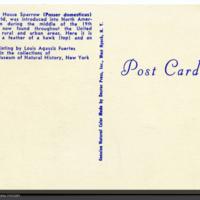 http://lbry-web-002.amnh.org/san/AMNH_postcards/100213323_21v.jpg
