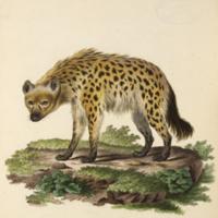 http://lbry-web-002.amnh.org/san/naturalhistories/b10764136_3.jpg