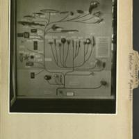 <em>Family Tree of Animal Kingdom</em>, photograph mounted to evolution of mammals, general mammalia folder