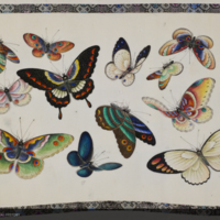 Hand painted colorful butterflies from Chinese plates of butterflies