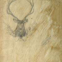 Antelope, drawing for use in Upper Nile Region Group, Akeley Hall of African Mammals