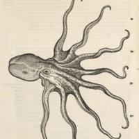 De polypis (octopus or polypus)