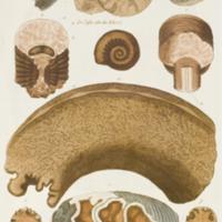 http://lbry-web-002.amnh.org/san/naturalhistories/b10533151_5.jpg